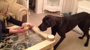 The Giant Dog Meets His New Adorable Friend