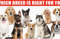Reviews Of Top 10 Dog Breeds To Let You Decide Which One To Buy