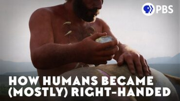 How Most Of The Humans Became Right Handed?